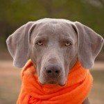 dog-1121623_1280