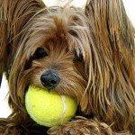 אילוף כלבים על ידי משחקים