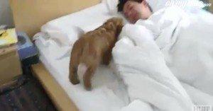 כלב מעורר בבוקר השכמה
