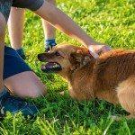 הפרעות קשב וריכוז – טיפול באמצעות בעלי חיים
