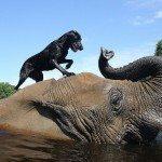 חברות מיוחדת בין פיל וכלב