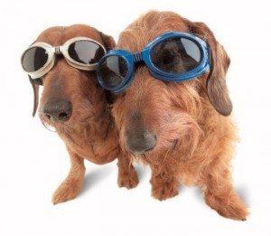 משקפי שמש לכלבים
