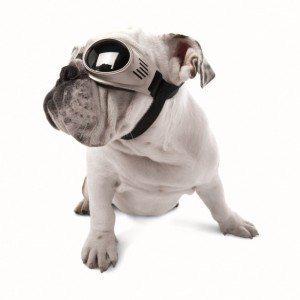 משקפי Doggles