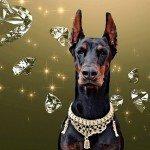 ביגוד, אקססוריז ותכשיטים – לכלבים מפונקים