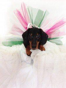 אופנה לכלבים