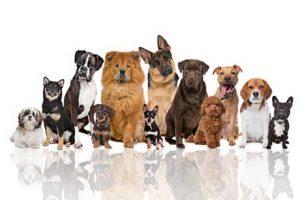 גזעי-כלבים