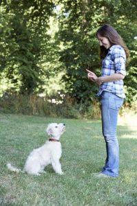 ללמד את הכלב לא לקפוץ על הרגל
