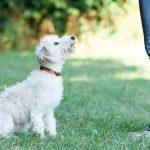 קפיצות על אנשים – איך לחנך את הכלב לא לקפוץ