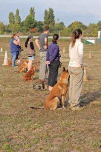 לימודי אילוף כלבים בקבוצה עם מאלף