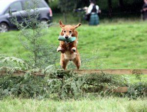 שיטות לאילוף כלבים