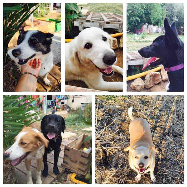 פנסיון כלבים בצפון – כלבים ואנשים