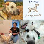 שמרית בן דוד – מאלפת כלבים בצפון