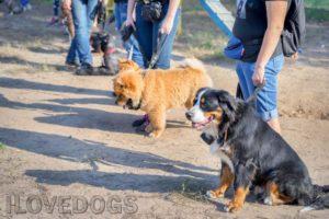 קורס אילוף כלבים מקצועי
