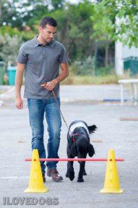 שיעור אילוף כלבים
