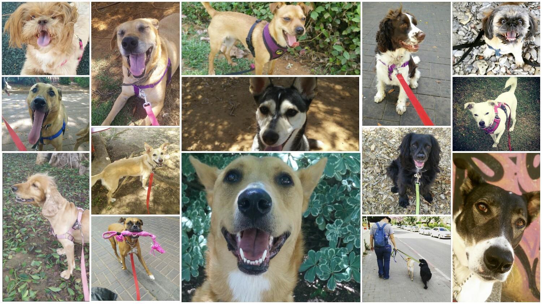 שושנה – מאלפת כלבים במרכז