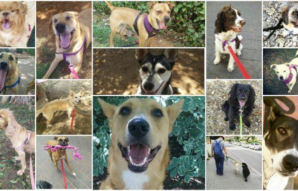 שושנה – מאלפת כלבים במרכז 072-3922316