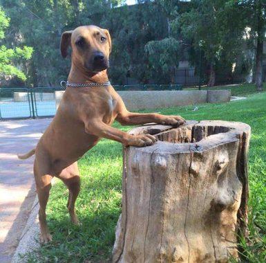 אילוף-כלבים-בהוד-השרון
