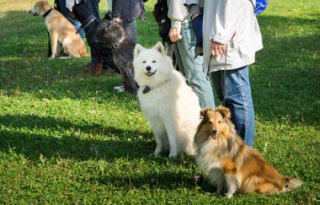 קורס אילוף כלבים – להפוך תחביב למקצוע