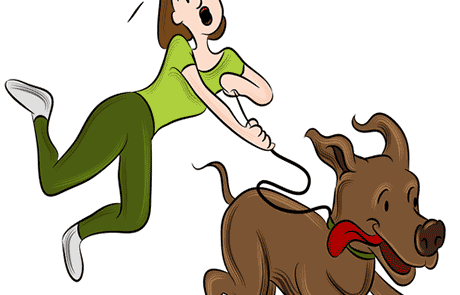 טעויות נפוצות באילוף כלבים