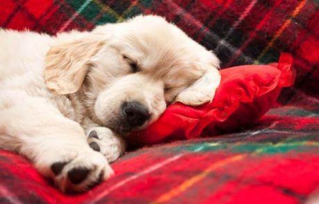 מיטות לכלבים