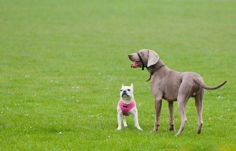 מהו אילוף כלבים בגישות חיוביות?