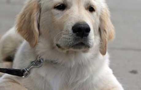 אילוף כלבים – מדריך מקוצר