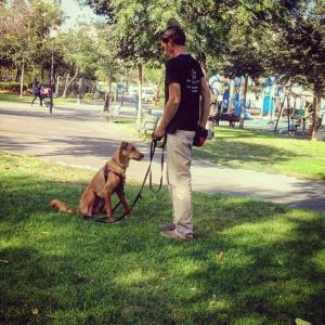dog-training-jerusalem