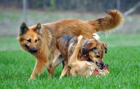 כך תלמדו את הכלב לשחק יפה