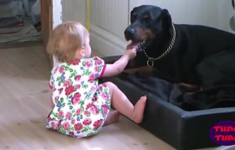 תינוקות וכלבים עילאיים ומתוקים