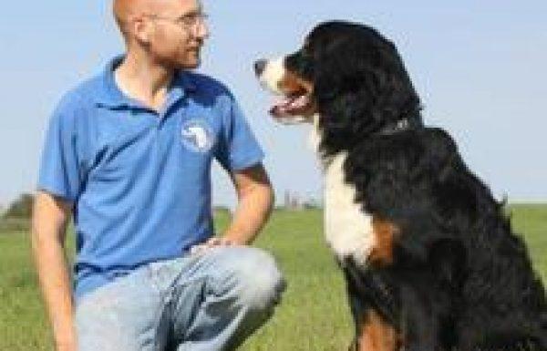 גיא תיכון – מאלף כלבים מקצועי