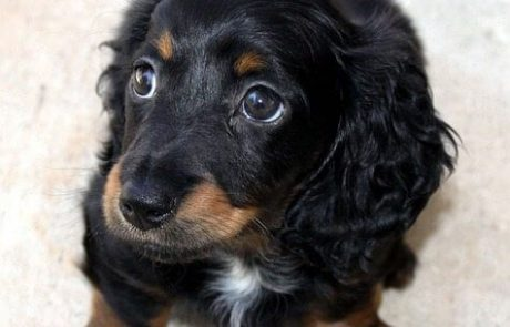 איך לבנות קשר נכון עם הכלב