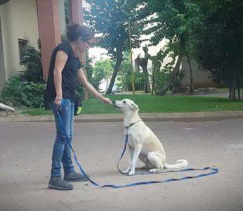 shani-dog-trainer