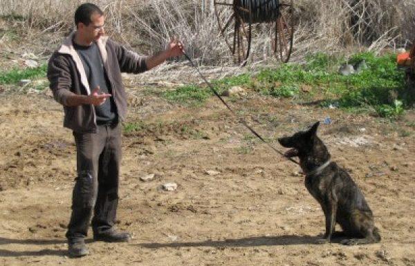 אורי גליק – מאלף כלבים מקצועי
