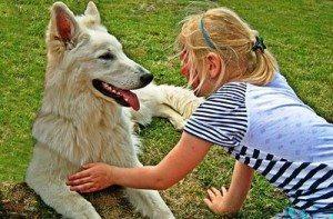 קשר בין ילדים וכלבים
