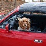 למה אילוף כלבים זה לא כמו לנהוג במכונית