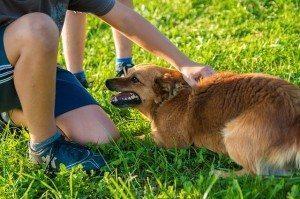 ילדים וכלבים - זיווג משמיים