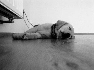 כלב ישן על הרצפה