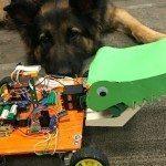 36 שעות של המצאות למען בעלי חיים (וגם כלבים)