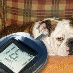 מחלת הסוכרת בכלבים
