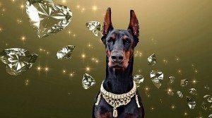 יהלומים לכלבים