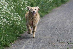 כלב - בוא אליי