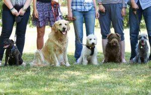 קורס אילוף כלבים קבוצתי