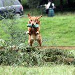 סקירת שיטות אילוף כלבים