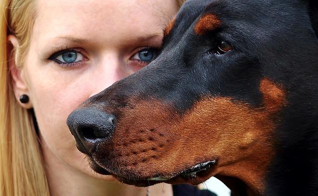 אילוף כלבי דוברמן