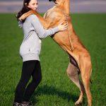 על דומיננטיות בכלבים – האם היא קיימת?