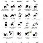 איך להפוך גור חששן לכלב תוקפן?
