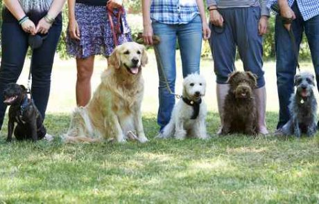קורס אילוף כלבים