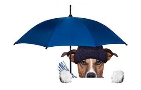 הכן כלבך לחורף – שמירה על הכלב בחורף